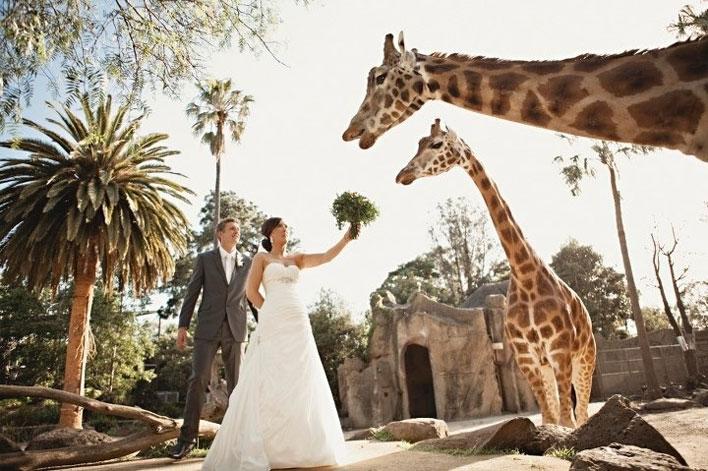 Budget For Wedding Invitations as beautiful invitations design