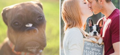 wedding-day-dogs-featured