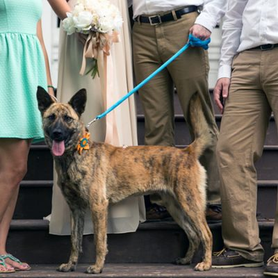 Dog Lover Wedding Inspiration at Riverwood Mansion