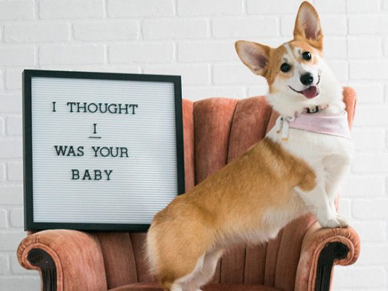Tips to Get Your Dog Ready for The New Baby